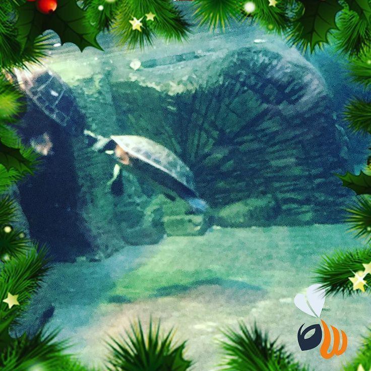 Tartarugone in acqua! Beautiful! Vi ricordiamo che la promo sul -25% per la progettazione e messa online di un SITO WEB MULTIPAGINA è valida solo fino a domani! CORRETE a chiederci info! Info@wombo.it #turtles #tartaruga #acqua #acquario #water #sea #nature #animals #winter #january #gennaio #igersmilano #agencylife #team #follow #picoftheday #bestoftheday #phootoftheday #milan #milano #womboit