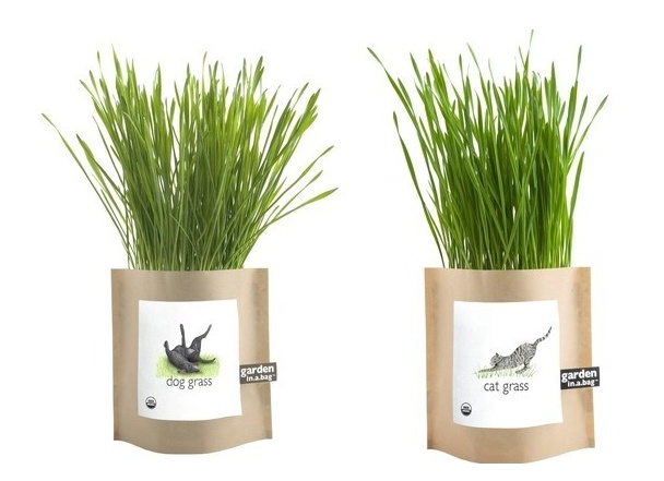 Pet Grass Garden In A Bag--Cassidy and Bugsy (my cats) would like this.