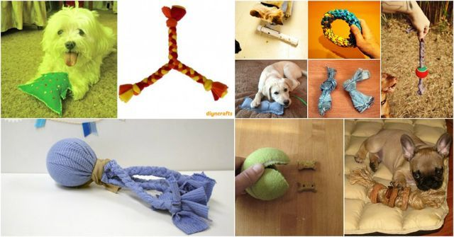 25 Frugally Fun DIY Dog Toys To Pamper Your Pooch