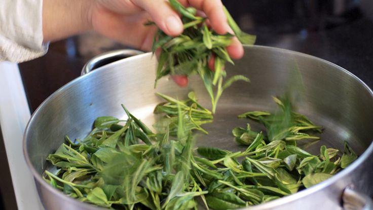 Herbal Farm Tour In Usa