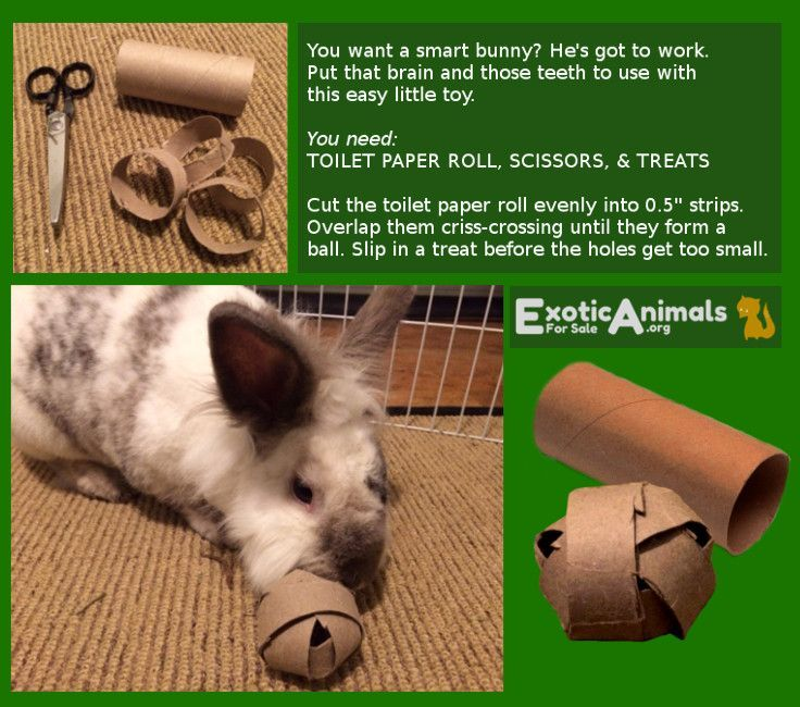 diy guinea pig toys with toilet paper rolls