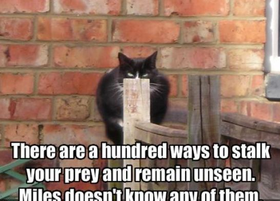 Very Funny | Very funny cat pictures with captions pictures 1