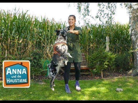 Australian Shepherd Information Fur Kinder Anna Und Die Haustiere Youtube In 2020 Haustiere Tiere Hund Wilde Tiere