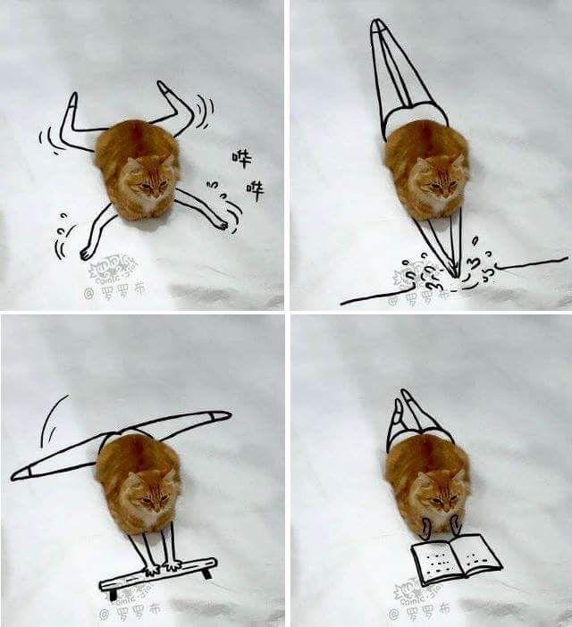 """Ehrlich gesagt lustig, finde ich! Vor allem, wie es aussieht, denkt die Katze """"Das ist e…"""