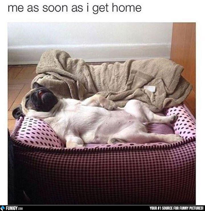 Me as soon as I get home (Funny People Pictures) - #job #sleep #tired #work