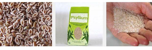 Le psyllium blond, le meilleur agent pour améliorer la santé du système digestif et cardio-vasculaire.