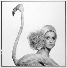 Catherine the greatPhotographers, Photos, Davidbailey, Pink Flamingos, David Baileys, Catherine Deneuve, Icons, Fashion Photography, Catherine Zeta-Jon