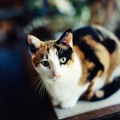 It's no secret that calico kittens have gorgeous fur. With three fun colors in the mix, there are tons of great cat names that capture the essence of your kitty's multicolor coat. Here are 50 of the most creative calico cat n/
