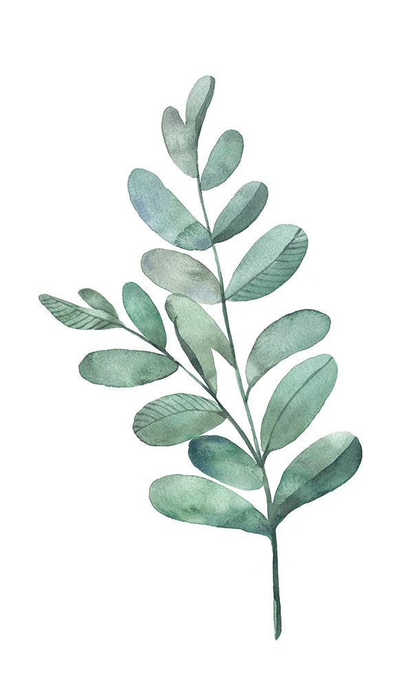 Watercolor leaf - something like this for dining room frames
