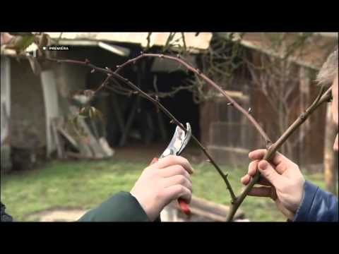 Rez jarný Malina černica - YouTube