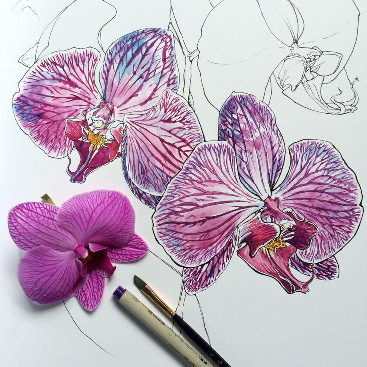 716 best art watercolor orchids images on pinterest - Dessin d orchidee ...