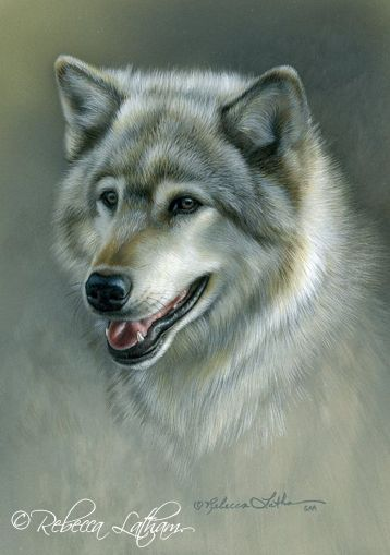 Silver Gray - Timber Wolf