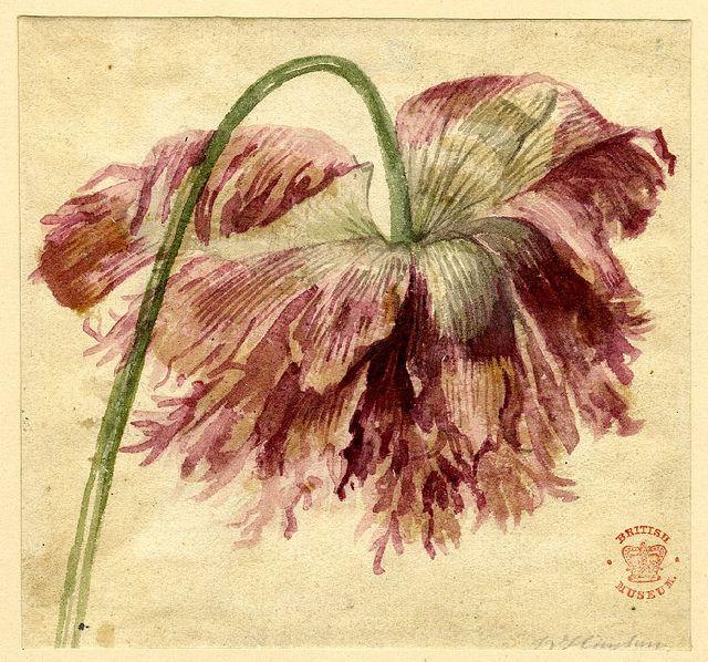 Jan Van Huysum flower: Watercolor Paintings, Jan Vans, Watercolors, Botany Art, Flowers Study, Vans Huysum, British Museums, Huysum 1697 1749, Water Colors