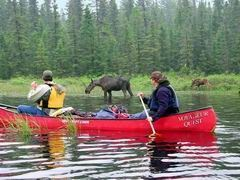 Canoe Algonquin Park - so beautiful.