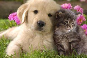 Még hogy nincs kutya-macska barátság?