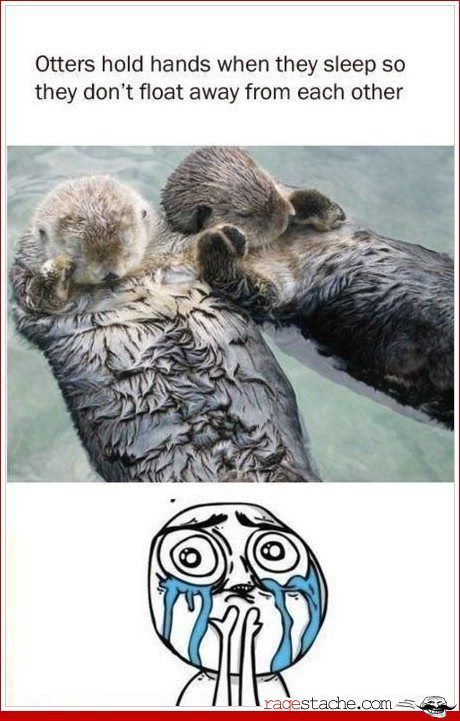 can't handle the cuteness: Animals, Hold Hands, Sweet, Otters Hold, Seaotter, Don T Drift, Sea Otters, Holding Hands