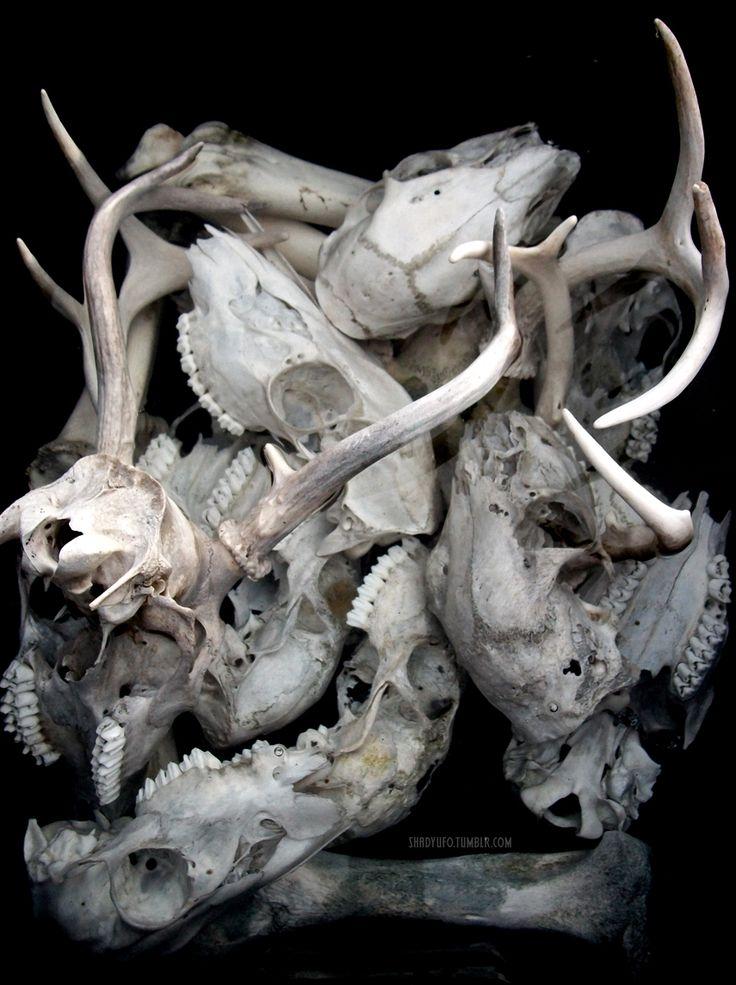 1000+ ideas about Painted Animal Skulls on Pinterest | Painted Deer ...