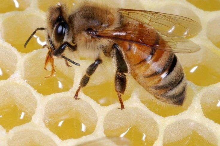 This online course about the science and practice of beekeeping is for beginning beekeepers. It covers bee biology and behavior, hive management, equipment, bee products, and more. #beekeeperequipment #beekeepingideas