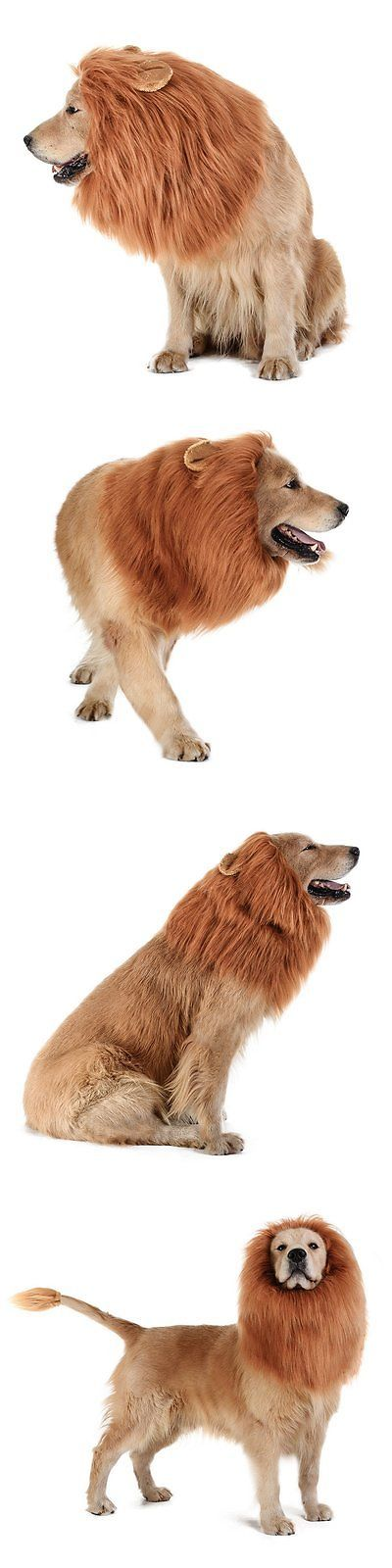 Costumes 52352: Tomsenn Dog Lion Mane - Realistic And Funny Lion Mane For Dogs - Complementary For -> BUY IT NOW ONLY: $37.88 on eBay!