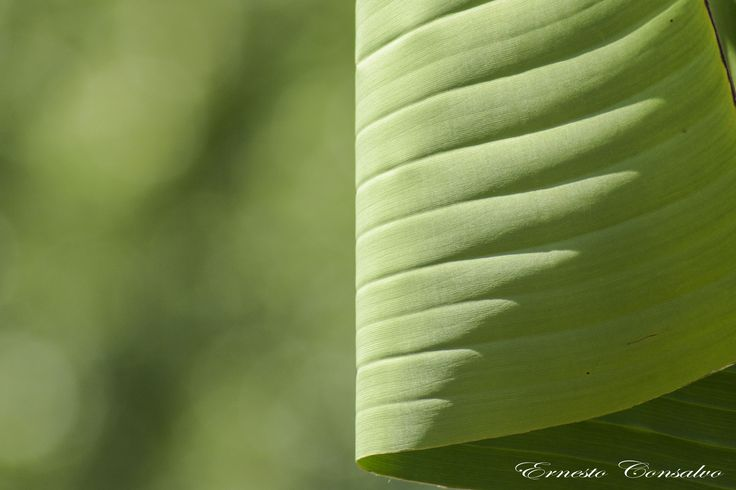 Abstract Nature by Ernesto Consalvo on 500px