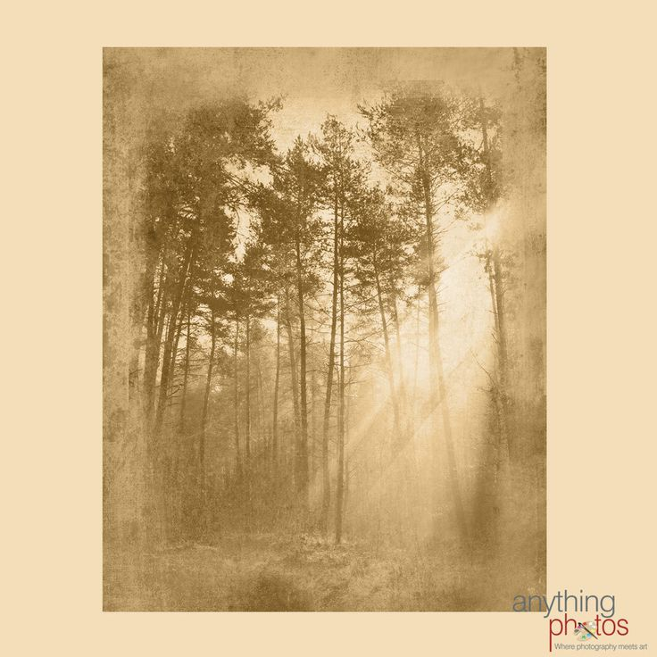 Sun Rays in Tree - Woods - Forest Rustic Artwork on Wood Panel - Made in USA by AnythingPhotos on Etsy