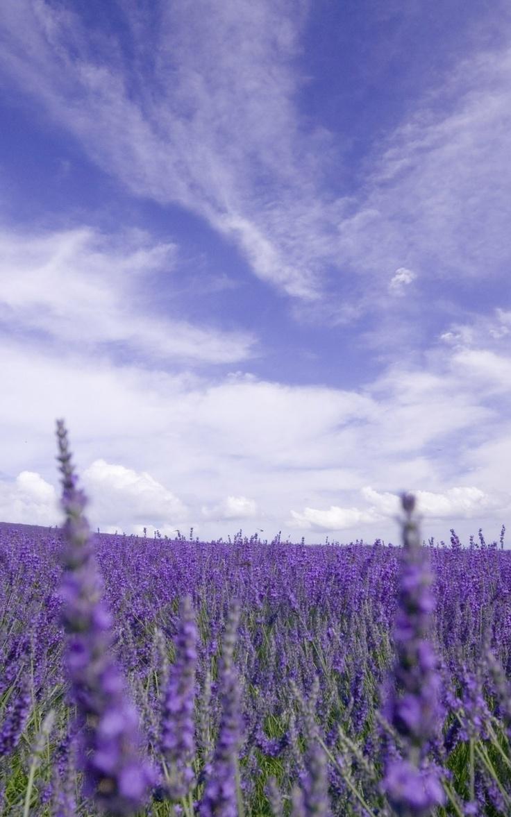 Lavender & blue. How beautiful!!!