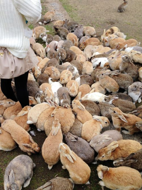 Okunoshima - rabbit island in Japan