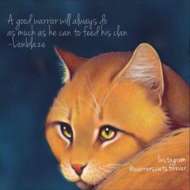 Warriors Dawn Erin Hunter: 1163 Best Images About Warrior Cats On Pinterest