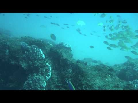 Coral reef fish at Creche, Ponta do Ouro (southern Mozambique)