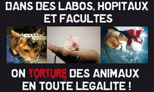 Animaux - Participez au sondage : Êtes-vous pour ou contre l'expérimentation animale au sein des hôpitaux et facultés de Brabois à Vandoeuvre-les-Nancy ?