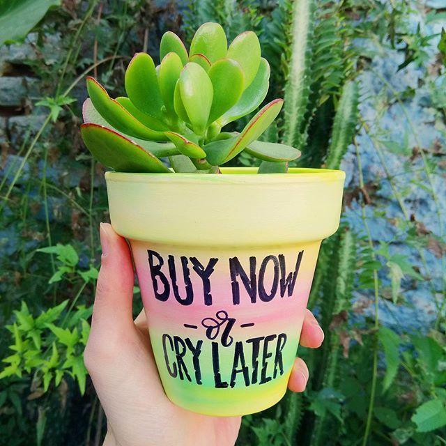 Maceta $150 Maceta + planti $250  Consultas por inbox - CABA  #Succulove #succulent #succulentsofinstagram #succulentcity #CactusLove #cactus #CactusLover  #cactusofinstagram #cactusclub #cactusobsession #succulentobsession