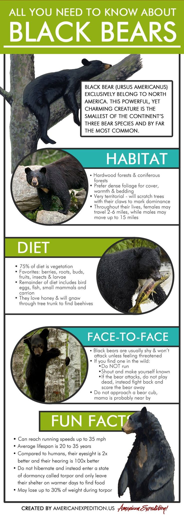 "Black Bear Infographic - ""All You Need to Know About Black Bears"" - Learn about black bear habitats, diets and what to do if you encounter one."