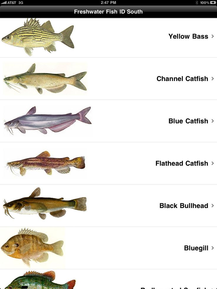 15 best fishing id charts images on pinterest fishing for Oily fish representative species