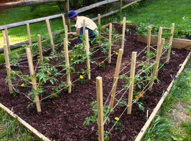 diy tomato cages garden pinterest. Black Bedroom Furniture Sets. Home Design Ideas