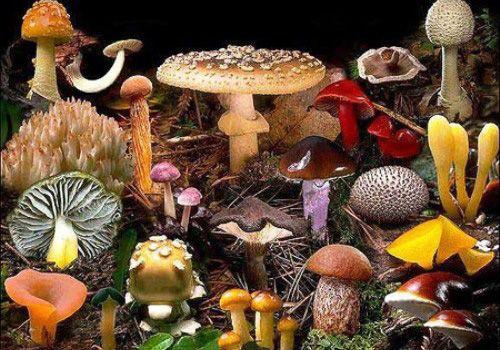 Грибы. Приготовление грибов. Заготовка грибов. Сушка грибов. Маринование грибов…