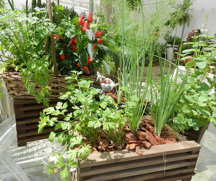 172 melhores imagens sobre curiosidades sobre plantas - Pedestal para plantas ...