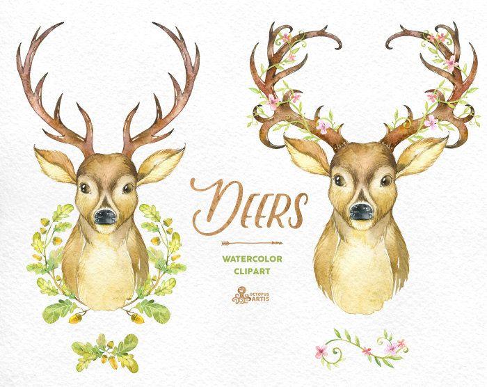 Deers. Watercolor deers with antlers hand painted by OctopusArtis