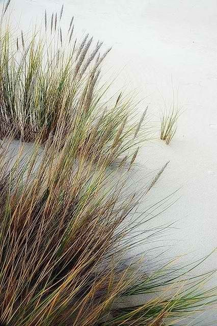 marram grass at the beach | photography . Fotografie . photographie |