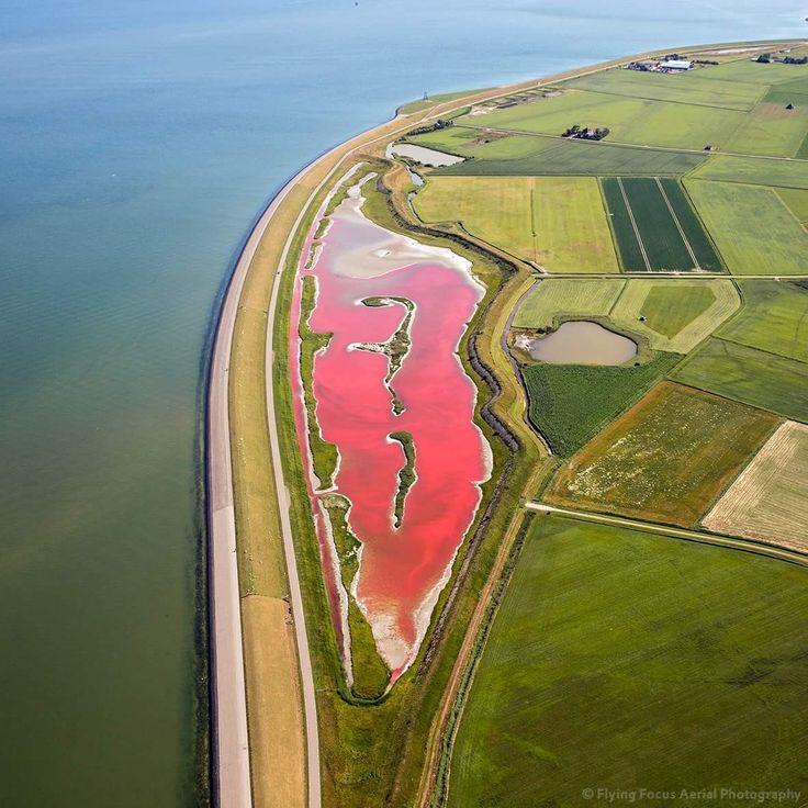 Het Wagejot #Texel flamingo- roze gekleurd door droogte icm micro-algen juli 2017