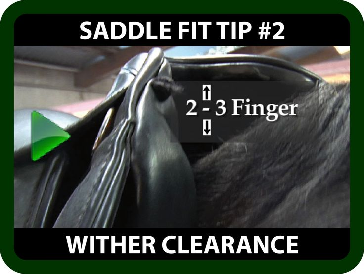 "Schleese Saddle Fit Tip #2 - Wither Clearance Is your horse reluctant to move forward? Are mysterious white hairs, strange bumps or soars appearing around the wither?  Although you may have the required 2-3 fingers wither clearance, you may not have enough clearance on all sides, which is vital ! Watch this informative video for some saddle fit tips on ""Wither Clearance"" that may help you! https://youtu.be/XpsHdHM66VY?list=PLA35A02DBF310BB9D"