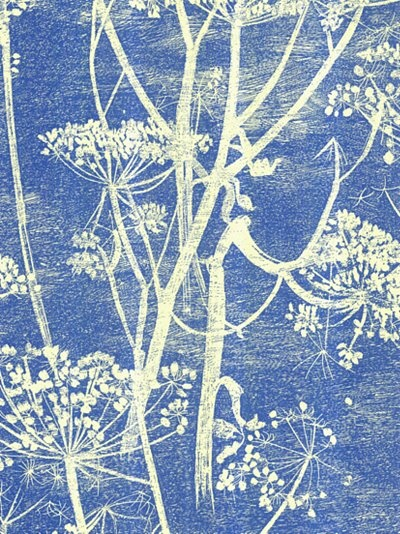 Salsify? Yarrow? Queen Anne's Lace (wild carrot)? white drawing on blue background