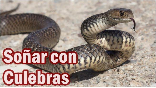 Qué Significa Soñar Con Culebras Culebras Serpientes Sueños