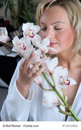 Pflege Grundlagen von Orchideen