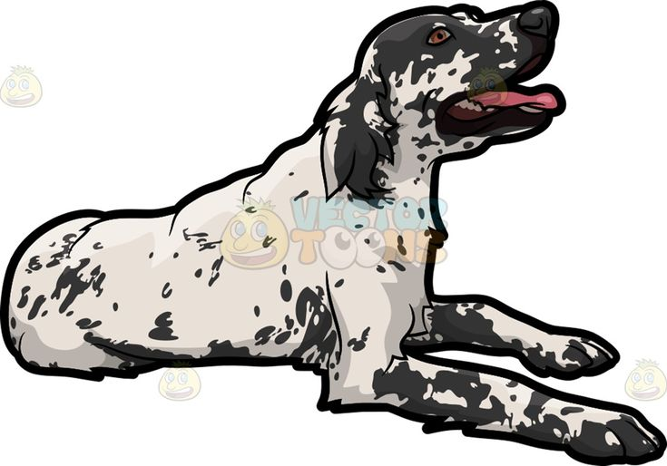 A friendly English Setter pet dog :  A dog with white fur and dark grayish spotty face and droopy ears resting on the floor while parting its lips to reveal a pink tongue  The post A friendly English Setter pet dog appeared first on VectorToons.com.