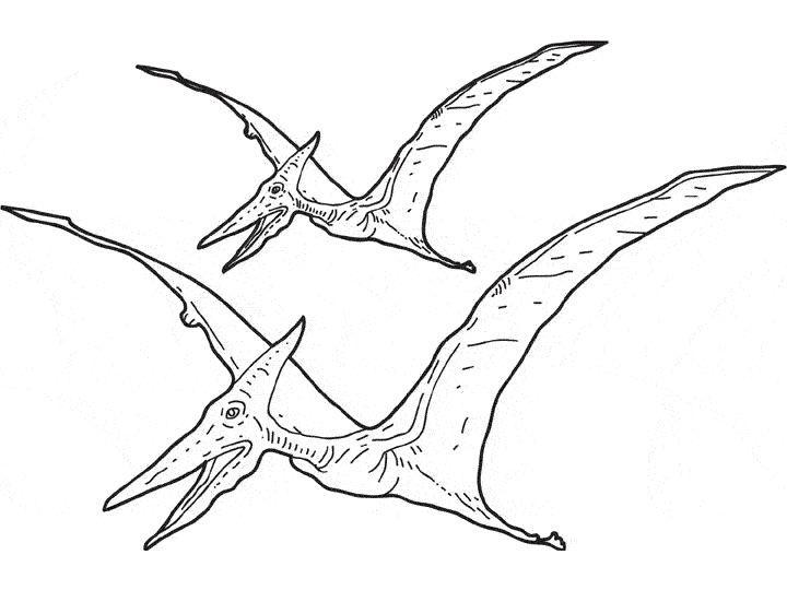 Coloriage Pterosauria Dessin Dinosaure Coloriage Coloriage