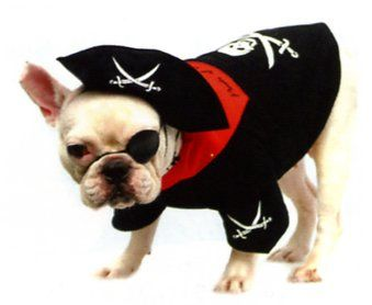 17 Best images about Halloween Costumes for Pets on Pinterest