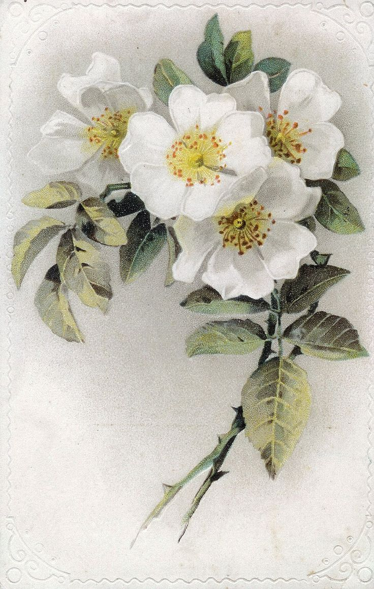 White roses on postcard:    http://lilac-n-lavender.blogspot.com/2012/03/french-lace-white-roses.html  ...  http://lilac-n-lavender.blogspot.com/2012/04/vintage-facebook-timeline.html  ...  http://www.lilac-n-lavender.blogspot.com/2012/06/vintage-baby-shower-printables.html  ...  http://www.lilac-n-lavender.blogspot.com/2012/06/box-of-treasures.html