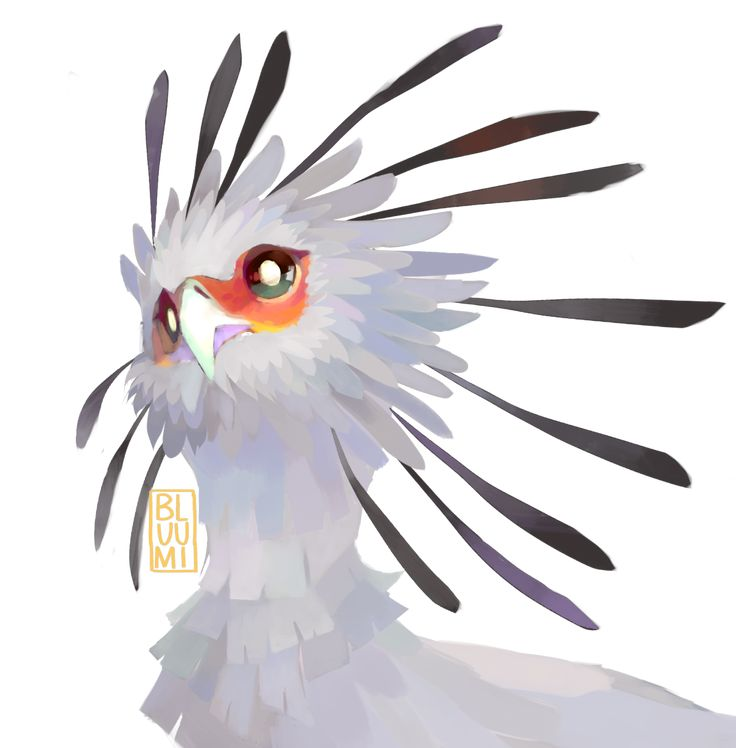 (・θ・)Birb of the week: Secretary birdThese birbs of prey have notably very long legs with a nice pair of pants to match! Don't let it deceive you, they can deliver quite the kick to their prey !