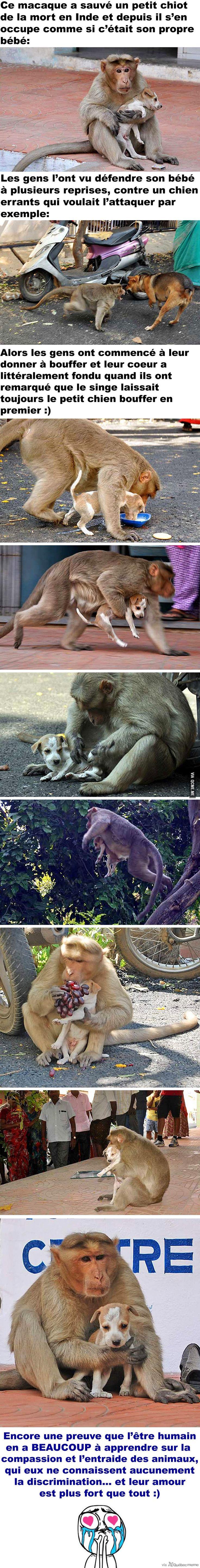 WOW. Voici la preuve que les êtres humains en ont encore ÉNORMÉMENT à apprendre des animaux: