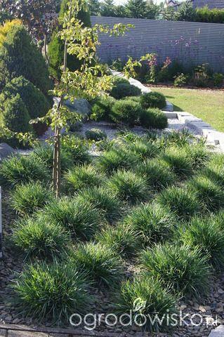 Ogród niby nowoczesny ale... - strona 1227 - Forum ogrodnicze - Ogrodowisko